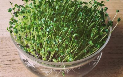 Breng je hormonen in balans; eet broccolikiemen